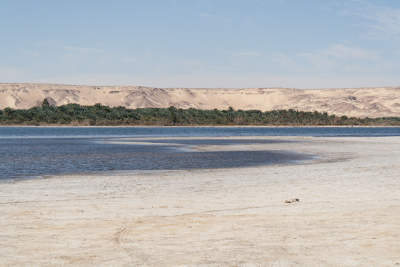 An oasis in Bahariya, just outside the White Desert